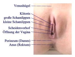 Bilder aus einer echten Vagina
